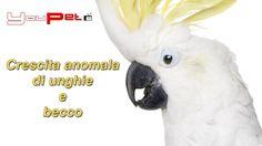 Crescita anomala di unghie e becco nei pappagalli