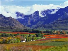 Robertson - a place of wine, mountains and endless vistas - Africa Freak. The Robertson Wine Valley is a drive from Cape Town, nestled between the Langeberg and the Riviersonderend Mountains. South Afrika, South African Wine, Namibia, Out Of Africa, Africa Rocks, Africa Travel, Wine Country, Cape Town, Beautiful Places