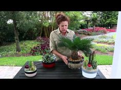 Plant Details | Costa Farms