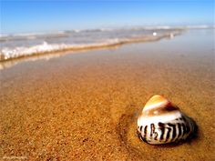 sea shell bliss