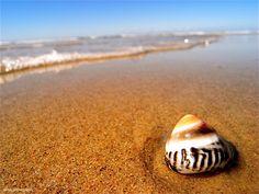 sea shell bliss