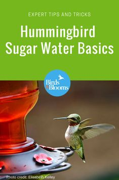 Hummingbird Sugar Water 101: Attract more hummingbirds to your backyard with these tips from experts!