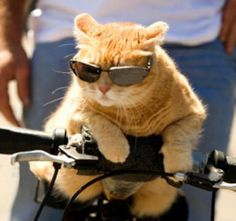 Funny cat pictures with guns, funny cat picture, funny cats photos ...