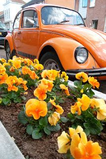 Orange:  #VW Bug and flowers, Rotterdam.