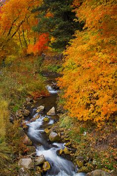 Autumn, Millcreek Canyon, Wasatch National Forest, Utah (2012) | Tucapel via Flickr ------ Millcreek  canyon is right in our back yard.