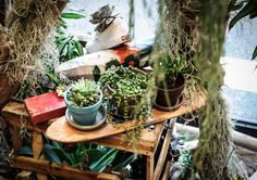 【ELLE】 プラントアーティスト 川本諭の show my GREEN FINGERS| GREEN FINGERS POP UP SHOP & Installation -Pilgrim Surf+ Supply in Residence-|エル公式ブログ