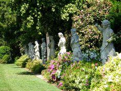 The camellia garden at the Huntington Library & Gardens in San Marino