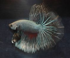 Check out these cool Betta Fish pictures for some ideas of what you may find and like.