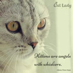 kittens are angels with whiskers