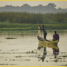 Tilapia fishing - Volta River
