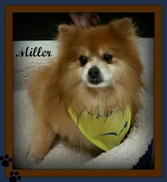 128 Best Adoptable Animals In Texas Images Animals Dogs Adoption