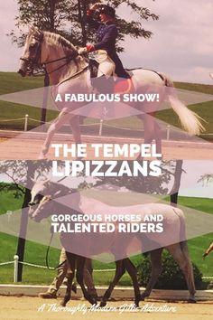 Enjoy the Tempel Lipizzans Horse Show, www.moderngillie.com