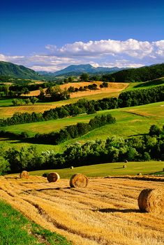 Parma, province of parma Emilia-Romagna: Italy -- reminds me of Midwest farm land in the states