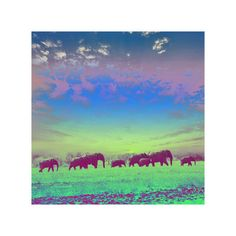 "Painted Elephants (12""x12"") by Sweet & Salty at Crush Collective - this piece of vibrant modern art is uniquely created by layering images captured on film and printing them on canvas, $100 !!"