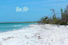 A must visit island on Florida's gulf coast. - Cayo Costa - Near Sanibel