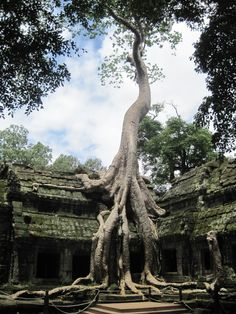 angkor wat, cambodia adventure
