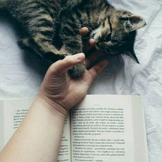 Hand holding and reading