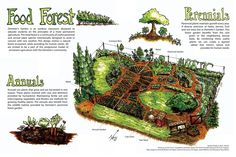 Add food forests into your permaculture garden