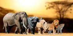 o maior site de turismo no mundo, o Trip Advisor, não vai mais vender ingressos para atrações turísticas com animais.