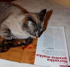 29.4.2014  tema: berem... mačjo revijo, ko pa jo  odložim, z branjem nadaljuje ona