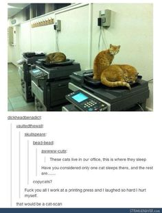 Funny pictures about The Worst Kind Of Cats. Oh, and cool pics about The Worst Kind Of Cats. Also, The Worst Kind Of Cats photos. Funny Cute, The Funny, Hilarious, Animal Memes, Funny Animals, Animal Captions, Lol, Funny Tumblr Posts, Laughing So Hard