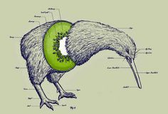 When the Kiwi's anatomy was revealed.