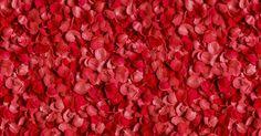 Cómo hacer perfume de pétalos de rosa
