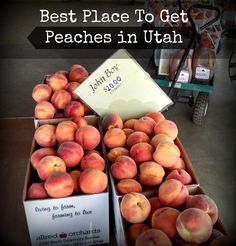 Best Peaches in Utah - These guys seriously have the best peaches!