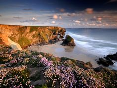 Bedruthan Steps on Cornish Coast, with Flowering Thrift, Cornwall, UK Posters by Ross Hoddinott at AllPosters.com