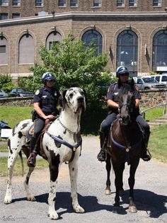 Mounted Police Dog  EDIT: yes people, this is fake. I thought that would be apparent so I didn't make a mention of it.