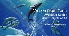 What do you think the dolphins might have to share during these chaotic times on our Sacred Planet? Or the whales, or trees or owls? Or even the bees. Their intelligence and wisdom is far greater t… March 7, Might Have, Whales, Gaia, Dolphins, Owls, The Voice, Thinking Of You, Shots