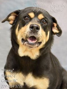 ✴6•12•17 SL✴ MY NAME IS PENNY!  PLEASE SAVE ME! Dogs for adoption,euthanization,rescue,sponsor