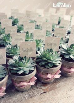 www.kamalion.com.mx - Recuerdos / Giveaways / Favors / Detalles Personalizados / Vintage / Bautizo / It's a girl/ Rosa / Pink / Mini Macetas / Plant / Suculenta / Flower pot.