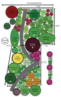 Mock Orange, Evergreen, Grass, Yard, How To Plan, Gardens, Patio, Grasses, Courtyards