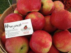 Honeycrisp apples from Rockburn Orchards, in Rockburn, Quebec! Always nice to enjoy them in the fall!
