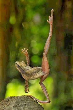 MORNING LIGHT: Frogs Sunday for Delphine