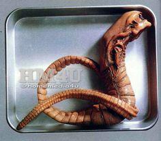 Alien Chestburster Sci-Fi 1/1 Vinyl Model Kit