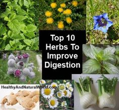 Top 10 Herbs To Improve Digestion. If you don't want to feel heavy after a meal, it is recommended to drink herbal infusion to improve digestion. Infusions and mixtures of herbs have several advantages when it comes to digestive problems: they adsorb gases, reduce stress, help blood flow to the digestive system and eliminate various pollutants. Using herbs is recommended for those suffering from constipation or diarrhoea, intestinal infections, irritable bowel and ulcers.