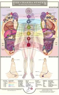http://balancingtouch.ca/reflexology-visual-dictionary-series/anatomical-reflexology-charts/