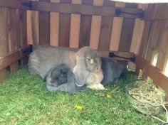 Mother bunny is definitely the one in charge - December  20, 2013