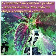 #experiência #perdão #ignorância #tolerância #compactuar #obrigação #escolha #psicologia #psicóloga #NovaIguaçu #cognitivocomportamental #followme