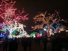 ☑ See the Lincoln Park Zoo Lights Zoo Lights, Lincoln, Things To Do, Chicago, Bucket, Christmas Tree, Park, Holiday Decor, Things To Make