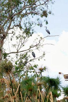 T & Serendipity: Zoo Lake: Row All The Boats! Serendipity, The Row, Boats, Bird, Animals, Animales, Ships, Animaux, Birds
