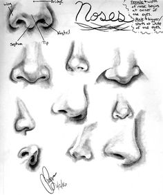 Nose References by Tarana.deviantart.com on @DeviantArt