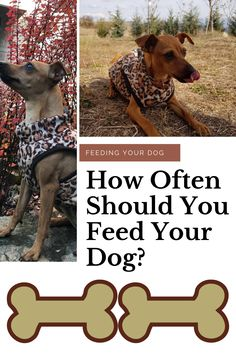 We all know that diet and nutrition are important components to keeping your dog a healthy member of the family for years to come. HOW often should you feed your dog? Funny Dog Names, Funny Dogs, I Love Dogs, Cute Dogs, Mini Pinscher, Miniature Dogs, Dog Rules, Dog Care Tips, Dog Feeding
