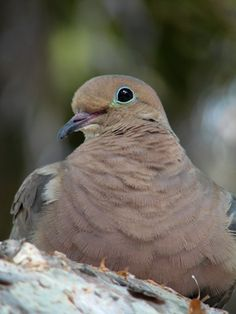 How to Make a Roost for Mourning Doves