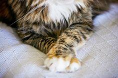 allison wonderland photographie, pet photography tips