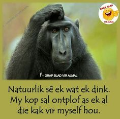 Haha Premarital Counseling, Afrikaanse Quotes, Highly Sensitive Person, Have A Laugh, True Facts, Infj, Laugh Out Loud, Jokes, Sayings
