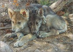 Carl Brenders - Brotherly Love - Wolf Pups
