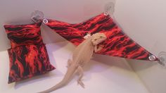 In the wild small reptiles rarely have the luxury to rest on a comfortable bed, with a nice pillow. We have found whether it is basking on a wonderful Hammock or sleeping on a bed, Bearded DragonS cho